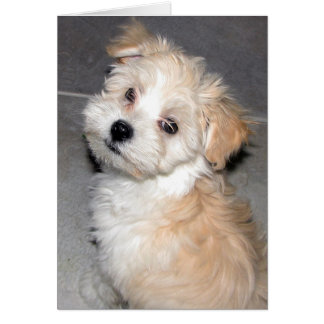 Thinking of You - Havanese Rescue pup Card
