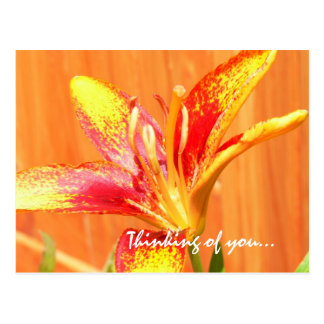 Thinking of You Lily Postcard