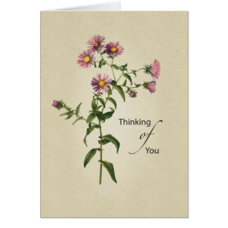 Thinking of You, Natural Pink Aster Card