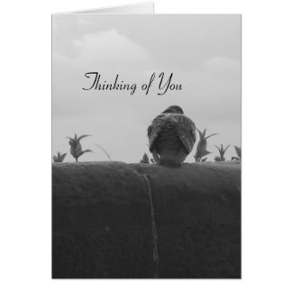 Thinking of You Pigeon Greeting Card