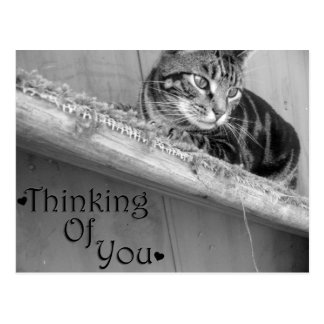 Thinking of You - postcard