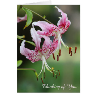 Thinking of You Pretty Pink Tiger Lily Floral Greeting Card