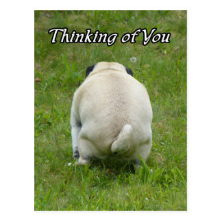 Thinking of You Pug Going the Bathroom Postcard