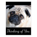 Thinking of You Pug Puppy Dog Black Postcard