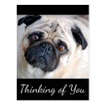 Thinking of You Pug Puppy Dog Black Postcard