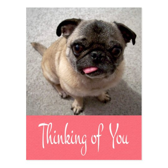 Thinking of You Pug Puppy Dog Pink Post