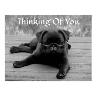 Thinking of You Pug Puppy Dog Postcard (Verse)