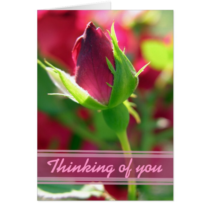 Thinking of you red rose bud greeting card