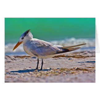 Thinking of You, Royal Tern Bird Card