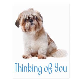 Thinking Of You Shih Tzu Puppy Dog Postcard
