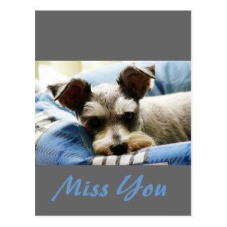 Thinking of You, sweet Mini Schnauzer Postcard
