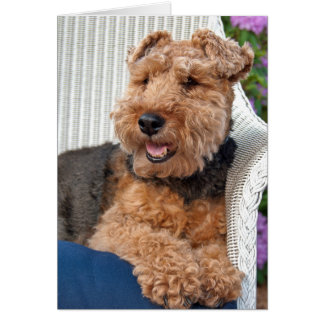 thinking of you-Welsh Terrier on wicker chair Card