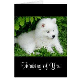 Thinking of You White Samoyed  Puppy Dog  Card