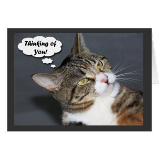 Thinking of You with Photo of a Cute Cat Card