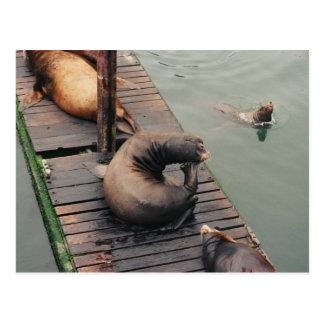 Thinking Sea Lion Humorous Postcard