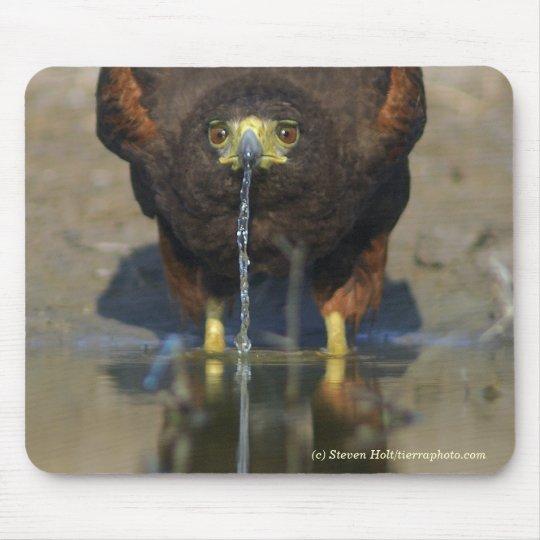 Thirsty Harris Hawk Mouse Mat