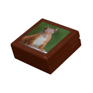 Thirsty Squirrel Gift Box