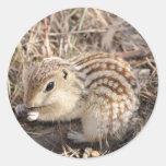 Thirteen Lined Ground squirrel Round Stickers