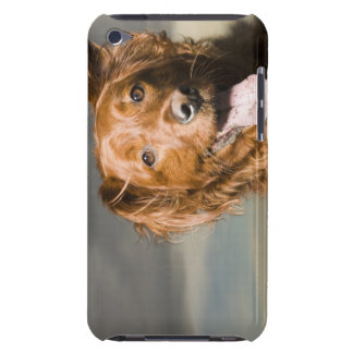 This dog is part golden retriever. barely there iPod case