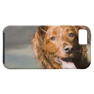 This dog is part golden retriever. iPhone 5 covers