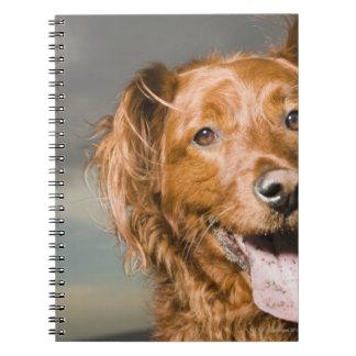 This dog is part golden retriever. notebook