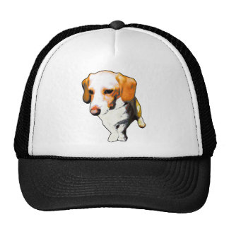 """this dog typical longevity of Beagles named """"cooki Trucker Hats"""
