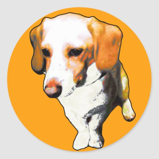 """this dog typical longevity of Beagles named """"cooki Sticker"""