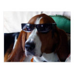 This hound dog is one kool kat postcard