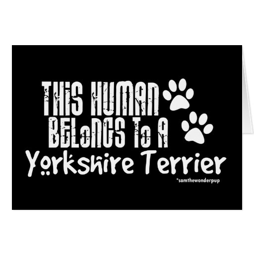 This Human Belongs to a Yorkshire Terrier Cards