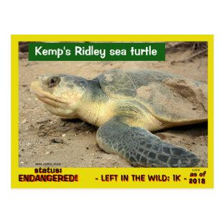 This sea turtle is in danger of vanishing -- postcard