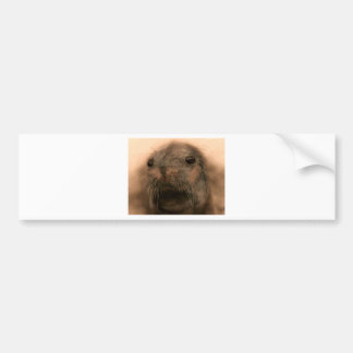 This Seal is so cute and lifelike Bumper Sticker