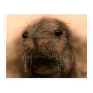 This Seal is so cute and lifelike Postcard