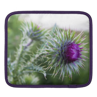Thistle #2 iPad sleeve