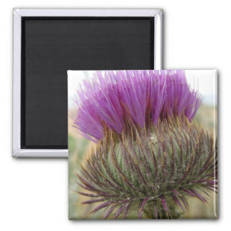 Thistle and Spider Square Magnet