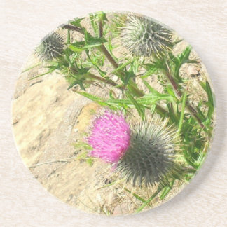 Thistle on the Rock Coaster