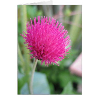 Thistle Plant Greeting Card