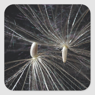 Thistle Seed Square Sticker