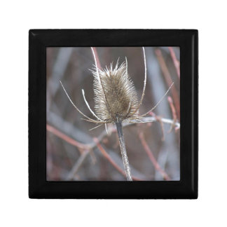 Thistle Small Square Gift Box