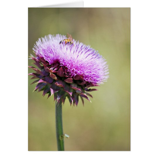 """Thistle with Bee""  collection Card"
