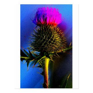 Thistles, The flower of Scotland. Postcard