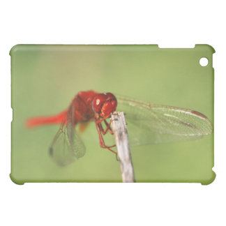 Thomas Baines Nature Reserve, Eastern Cape iPad Mini Covers