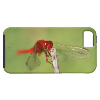 Thomas Baines Nature Reserve, Eastern Cape iPhone 5 Case