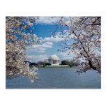 Thomas Jefferson Memorial with Cherry Blossoms Postcard