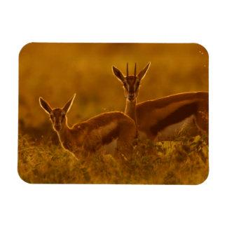 Thompson's Gazelle (Gazella Thomsonii) Mother Rectangular Photo Magnet
