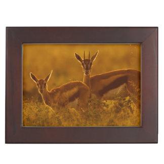 Thompson's Gazelle (Gazella Thomsonii) Mother Memory Box