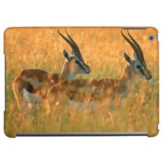 Thomson's Gazelle (Gazella Thomsonii) At Dawn