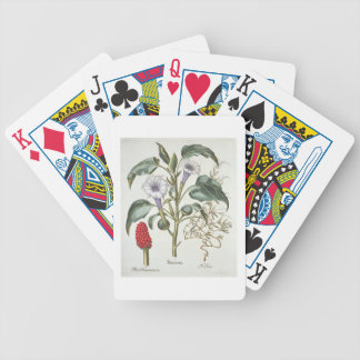 Thorn Apple, from the 'Hortus Eystettensis' by Bas Bicycle Playing Cards