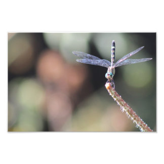 Thornbush Dasher, Customize with a Quote or Saying Photo Print