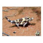 Thorny Devil Lizard Postcards