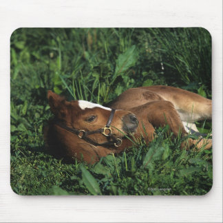 Thoroughbred Foal Lying Down Mouse Pad
